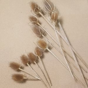 Accents - Textured stems